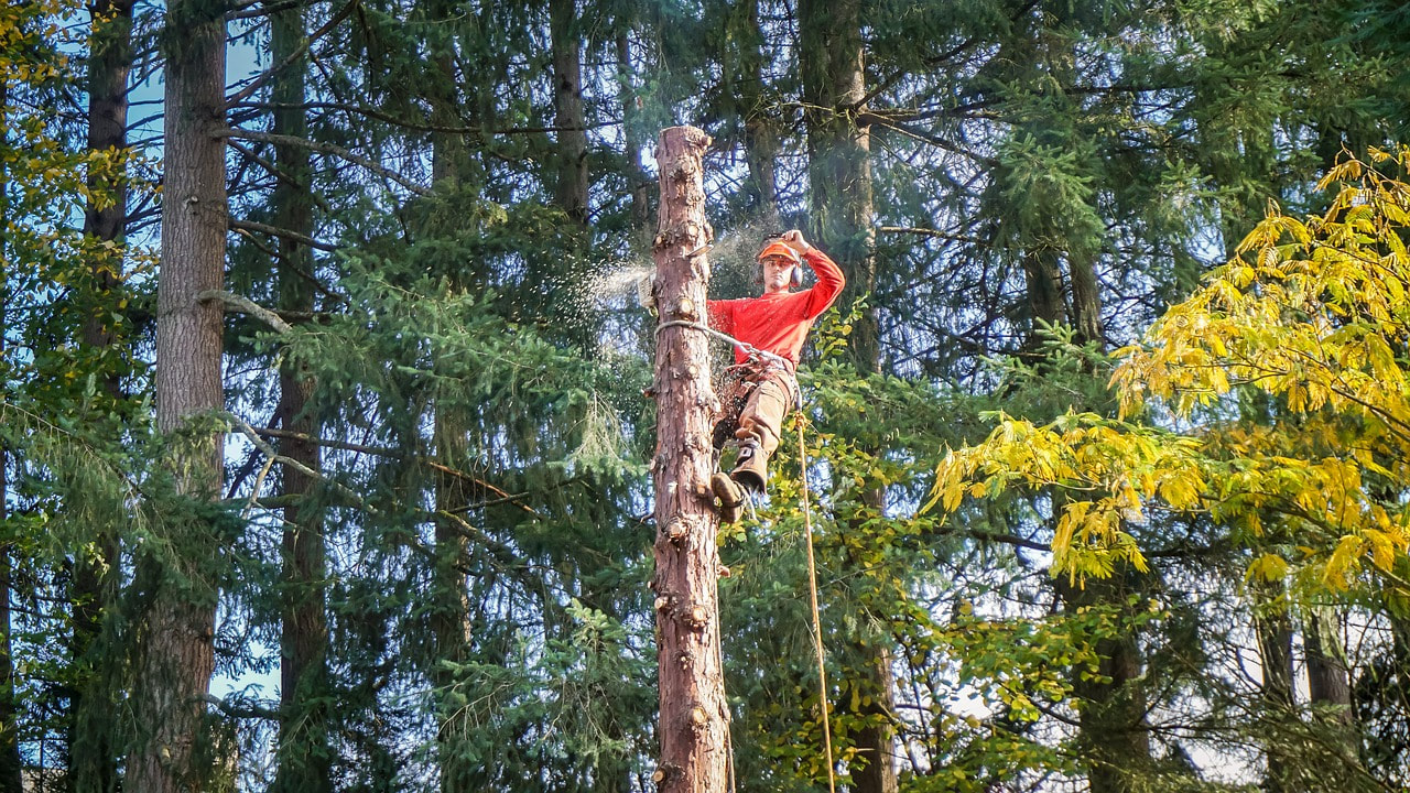 Hudson Valley Tree Removal - The Tree Service Pros