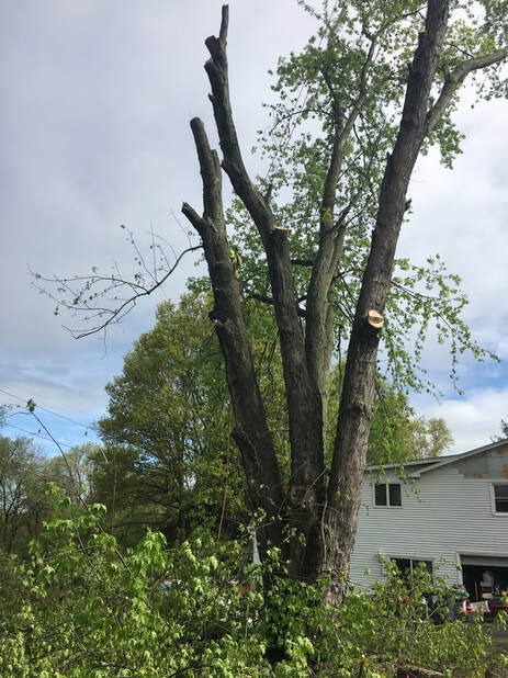 Tree Cutting Service Near Middletown, NY